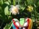 (6) Osterkörbchen